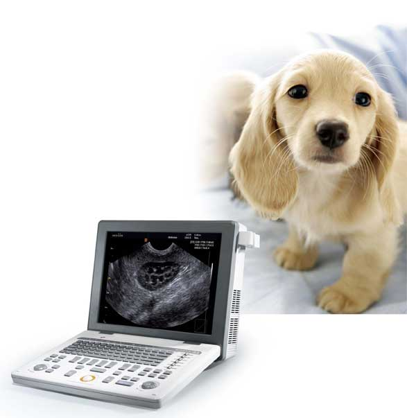 Hordozható állatorvosi ultrahang készülék - SonoVet R3